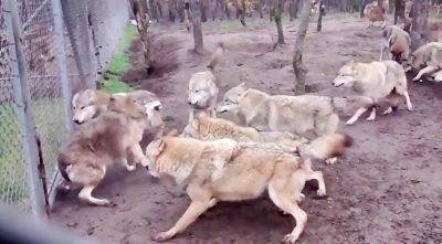 ما و جنگ گرگها بر سر قدرت