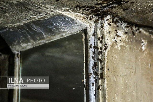 زندگی کارگر، دانشجو و معلمِ بازنشسته با معتاد و سارق زیر یک سقف/«فقر و بیپولی» نقطه اشتراک خانههای مجردی