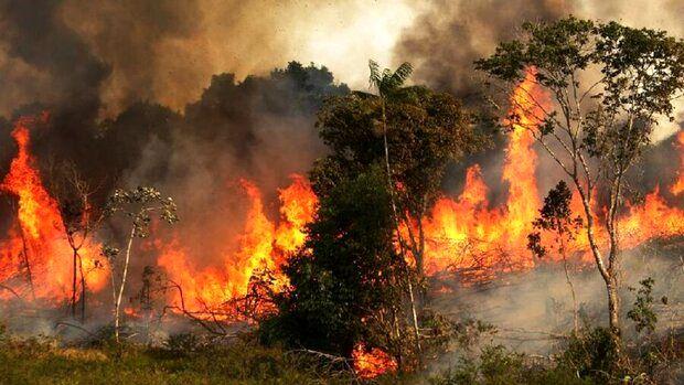 بدهی ۳۰ میلیارد، بودجه ۱۵ میلیارد؛ جنگلهایی که قربانی نبود بالگرد آبپاش میشوند