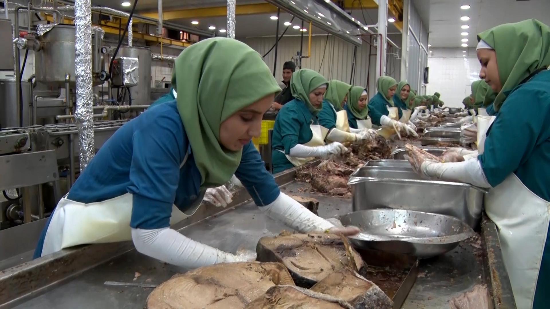 تعطیلی ۵۰ درصد از کارخانههای کنسروسازی